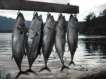 tuna3